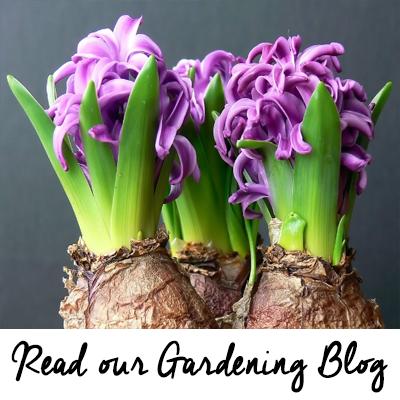 4 Seasons Garden Centre - Gardening Blog