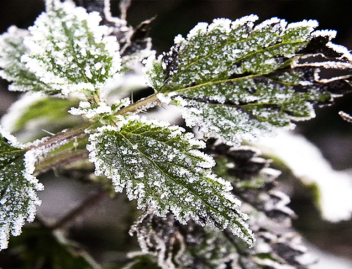 Protect your plants against the frost