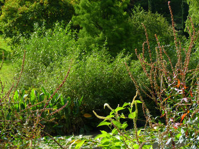green_shrubs_by_water.preview